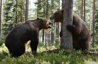 Бурые медведи делят территорию в лесу