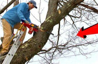 Большие ошибки во время валки деревьев бензопилой