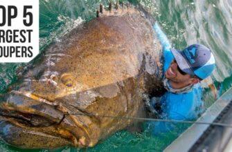 В Коста-Рике поймали окуня весом 200 килограмм