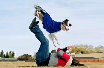 Самые смешные и глупые собаки