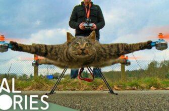 Таксидермист использовал своего кота как дрон