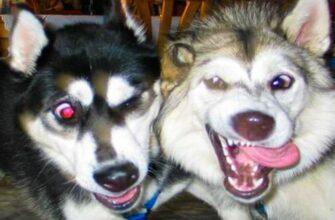 Смешная жизнь кошек и собак а также их хозяев