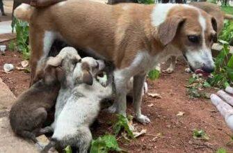 Спасение щенков провалившихся в канализацию