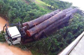 Опасная валка деревьев и безумные лесовозы в Бразилии