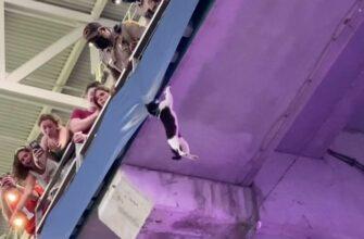 Спасение кота на стадионе который повил на трибуне