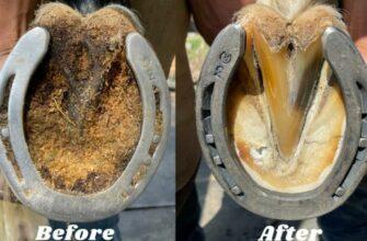 Как реставрируют подковы, чистят и подстригают копыта?