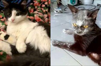 Эти кошки просто катастрофа!
