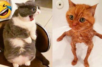 Вот почему кошки бояться воды как огня