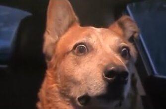 Собака шокирована криком женщины на улице