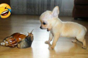 Эти кошки и собаки сами в шоке от своих поступков