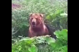 Неожиданная встреча грибников с медведем