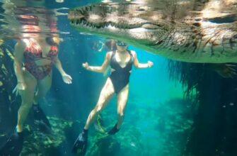 Девушки решили рискнуть и искупались с крокодилом