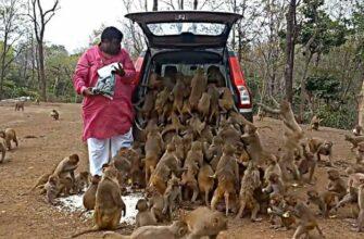 Обезьянки проголодались и другие удивительные моменты с животными