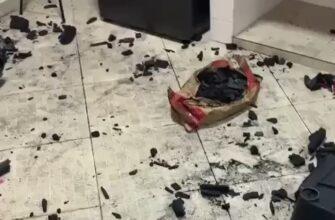 Что будет если оставить собаку и пакет угля в одной комнате?
