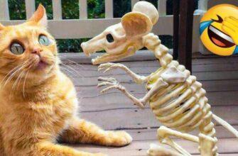 Смешная реакция кошек и собак на разные неожиданности
