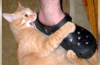 Почему кошки и собаки любят обувь?