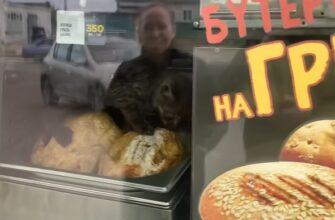 Котенок устроил себе праздник живота в киоске с курами-гриль