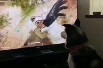 Реакция собаки на игру Far Cry 6