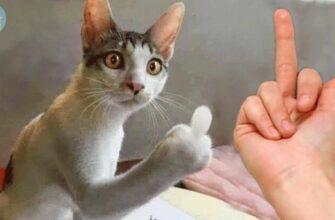 Злые кошки и собаки которые ненавидят своих хозяев